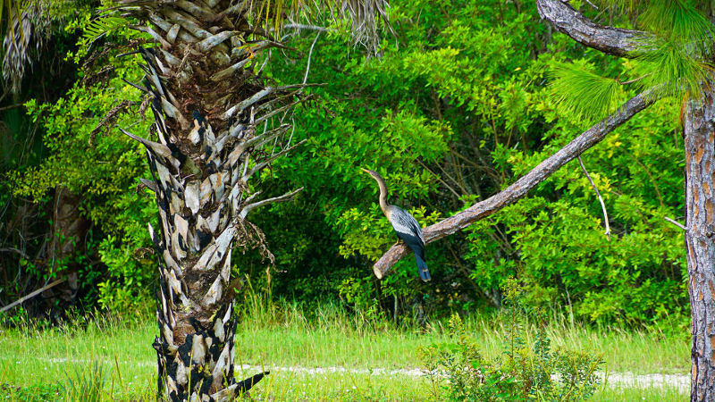 nature Fort Myers Florida