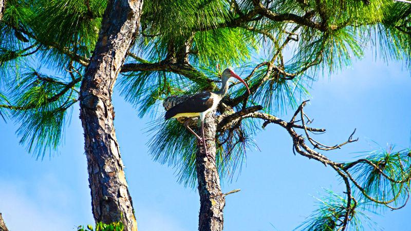Bird Fort Myers Florida